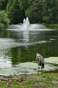 fontána park Londýn