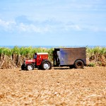 cukrová trstina a traktor