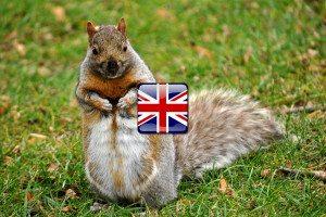 zvieratá po anglicky