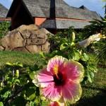 záhrady v okolí rumovne