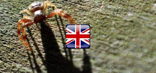 Hmyz po anglicky - angličtina pre samoukov