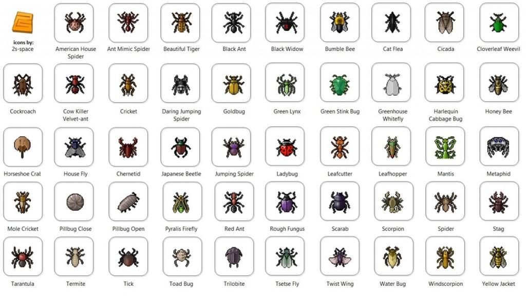 hmyz po anglicky