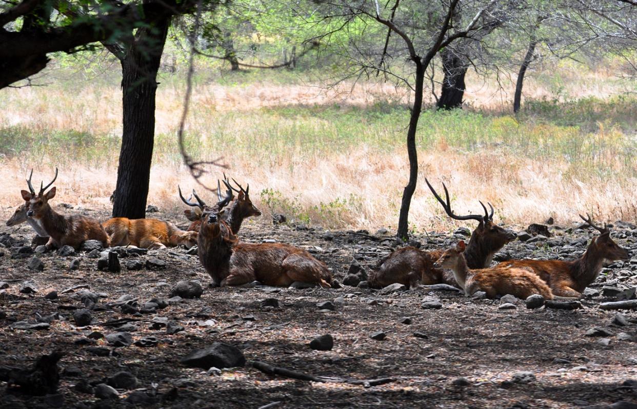 oddychujúce jelene