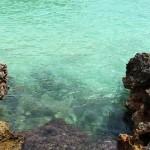 šnorchlovanie - koralová pláž