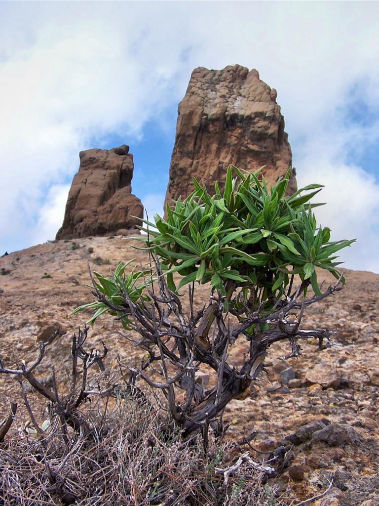 Monolit Roque Nublo