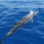 Delfíny Puerto Rico