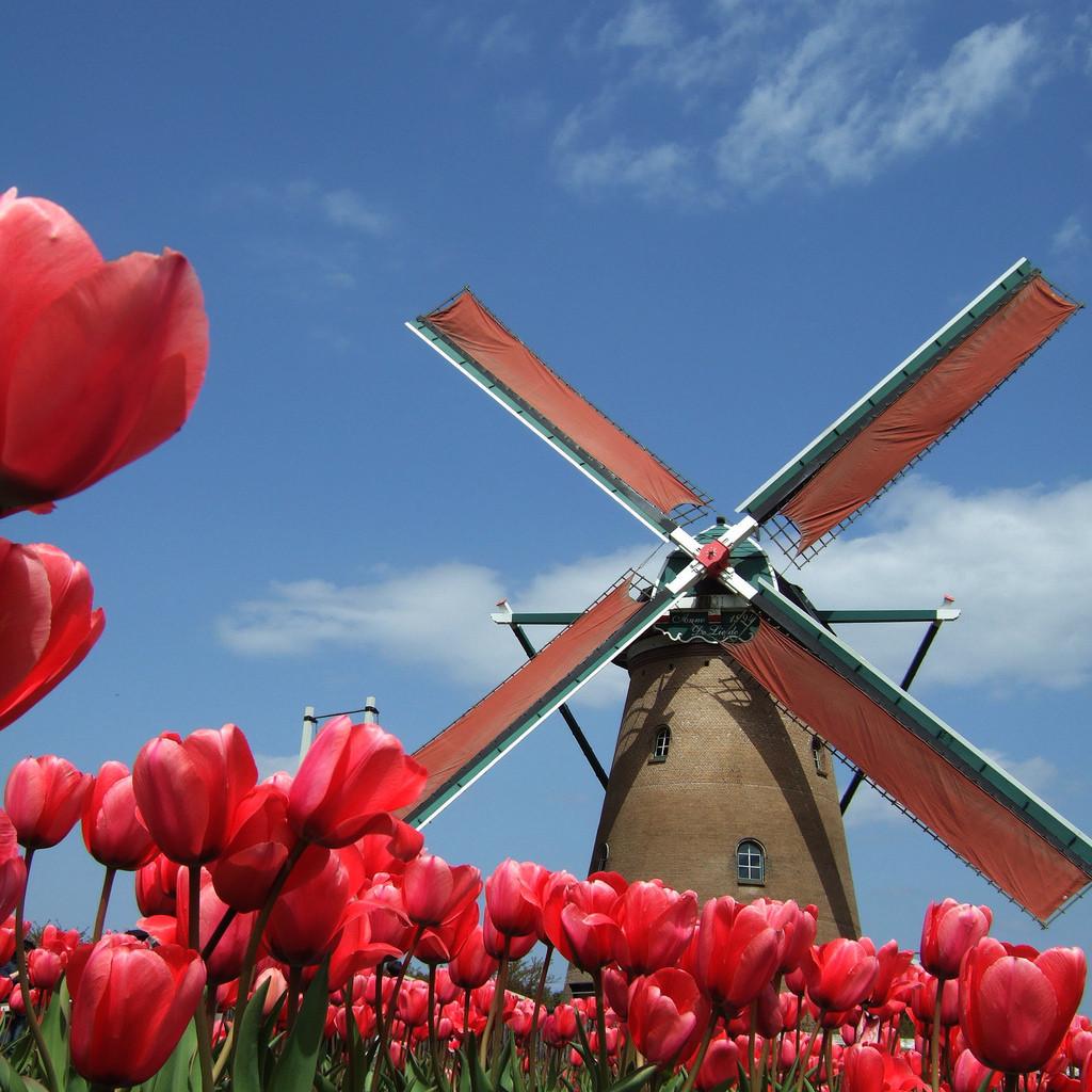 Holandsko - tulipány a veterný mlyn