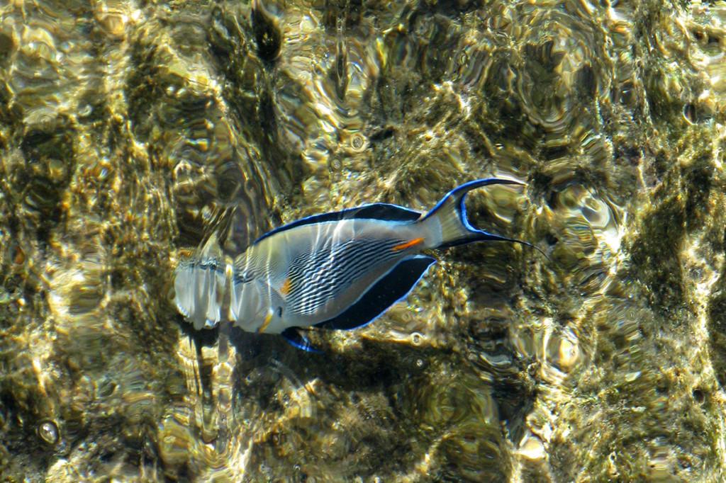 Podmorský život Sharm el Sheikh