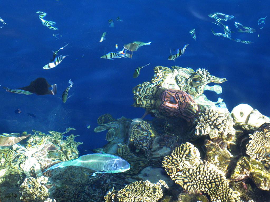 Ryby a koral v Sharm el Sheikh