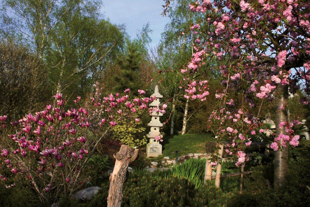 Rozkvitnuté Kitternburgské záhrady
