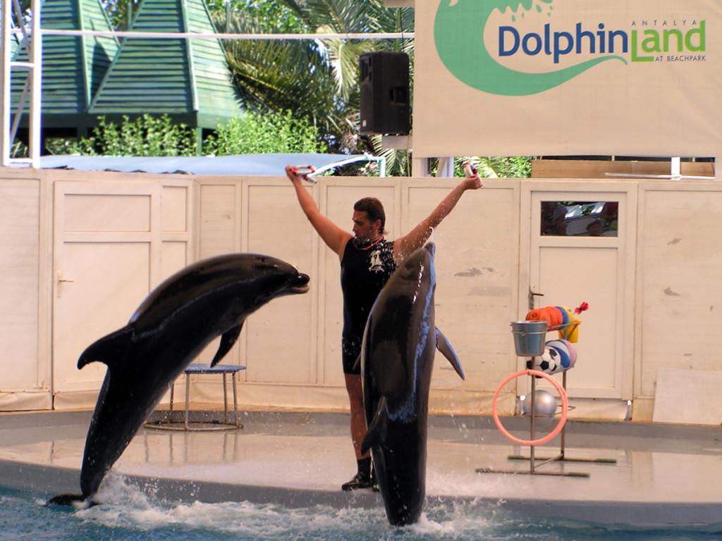 Delfíny show