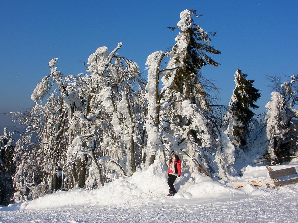 Ivana - zasnežené stromy
