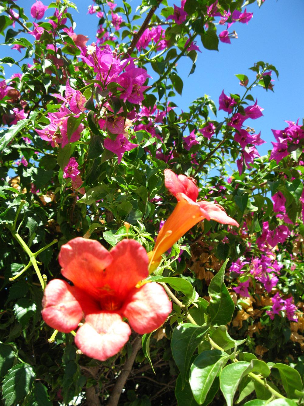 kvety, Cagliari