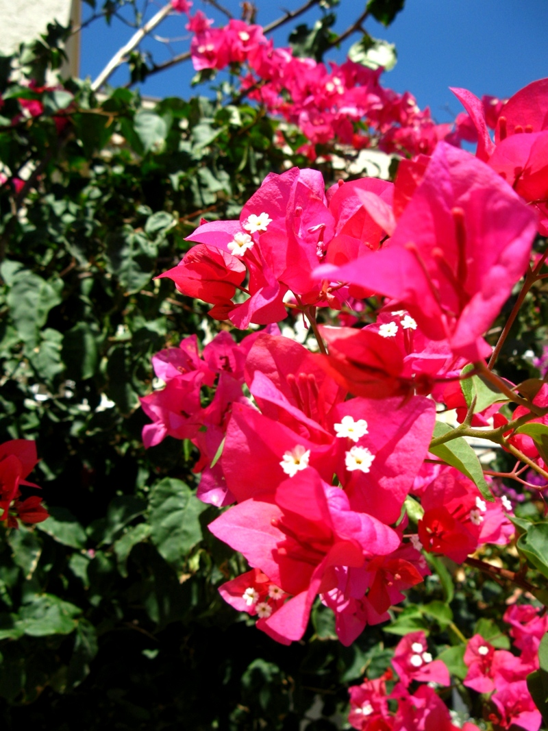 kvety v Cagliari