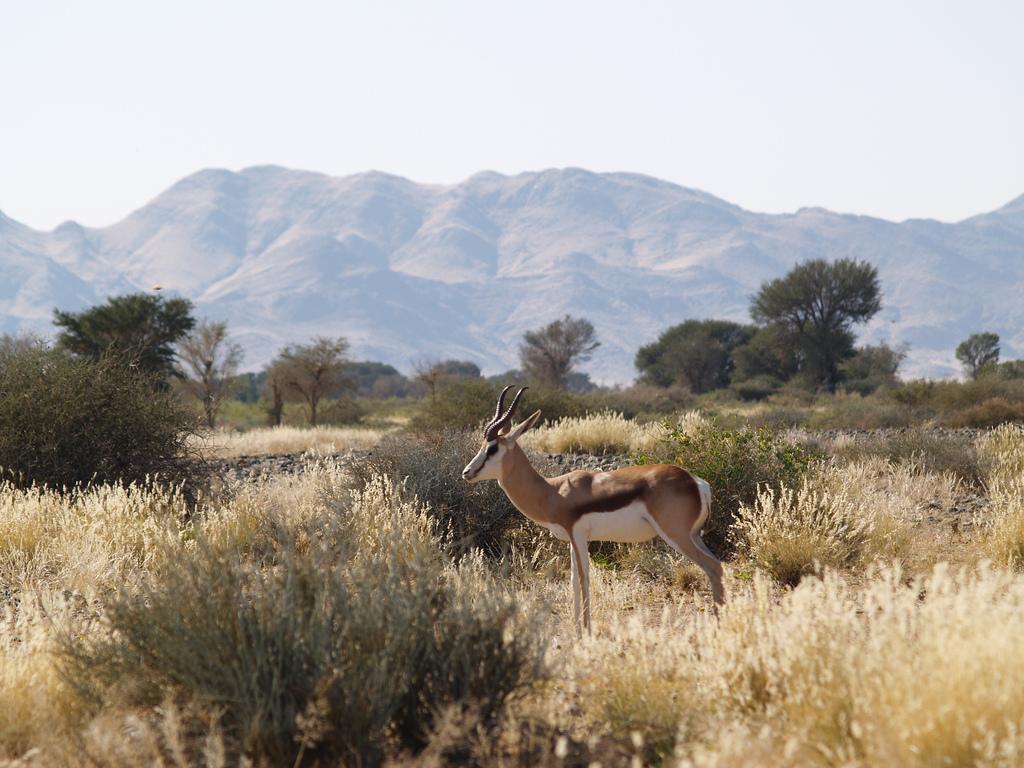 Namíbia zvieratá