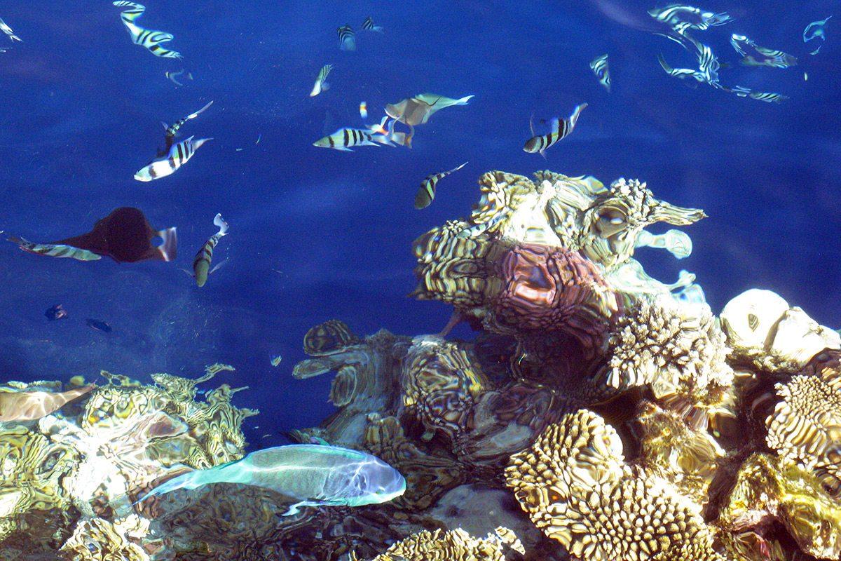 Sharm el sheikh - koralový útes ideálny na šnorchlovanie a potápanie