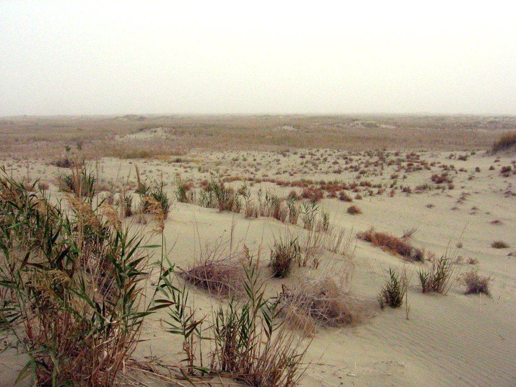 púšť Taklamakan