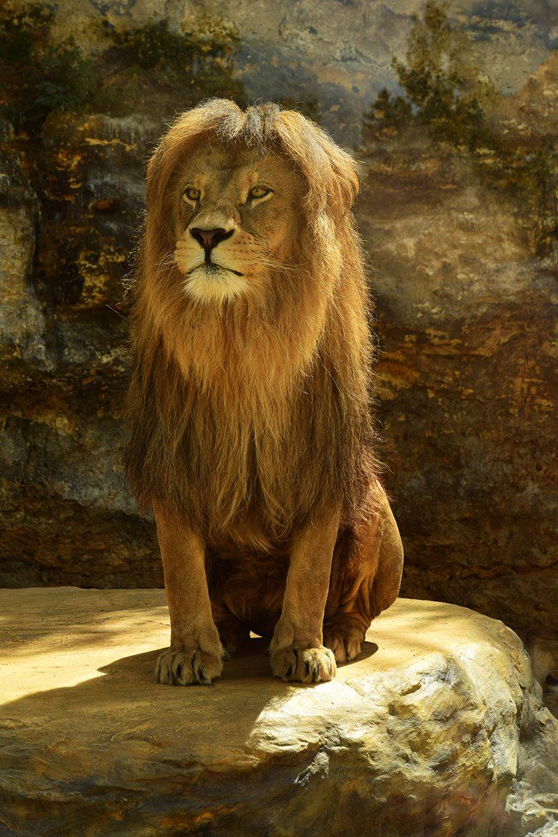 lev v zoo bojnice
