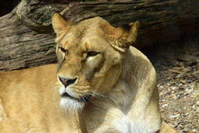 zoo bojnice - levica