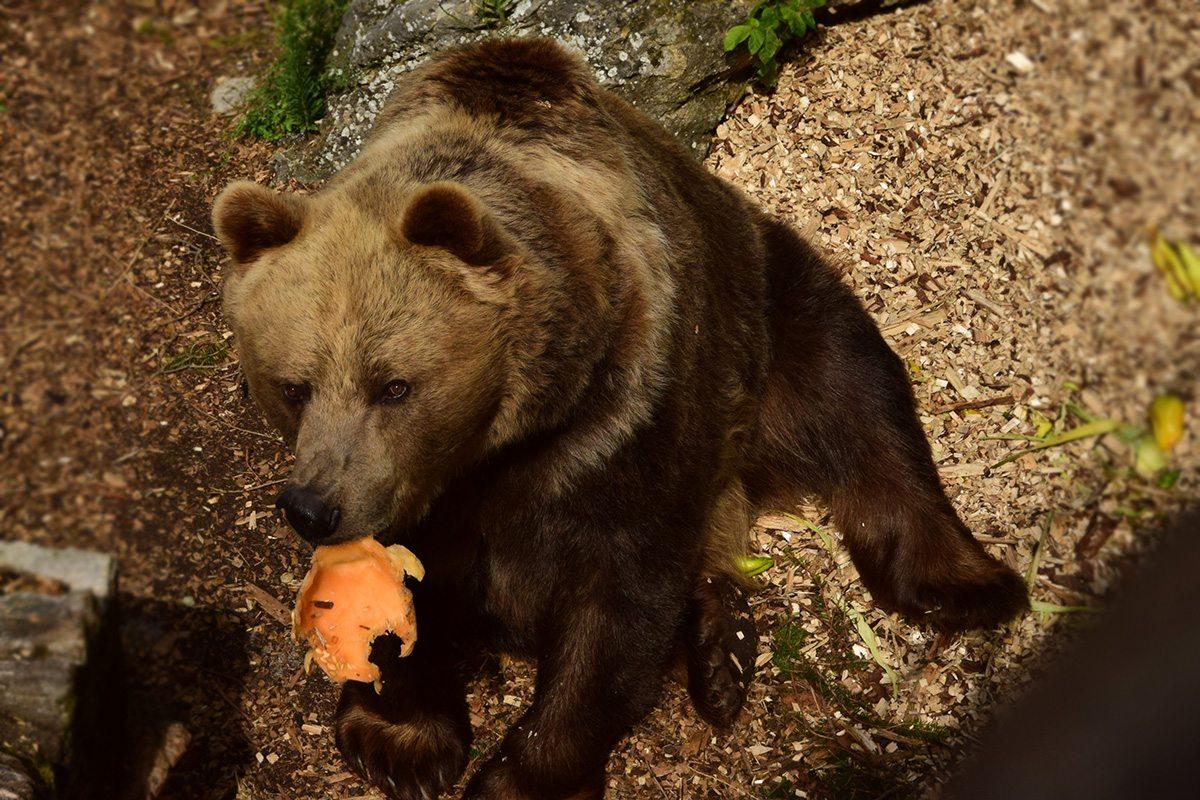 medveď - zoo bojnice