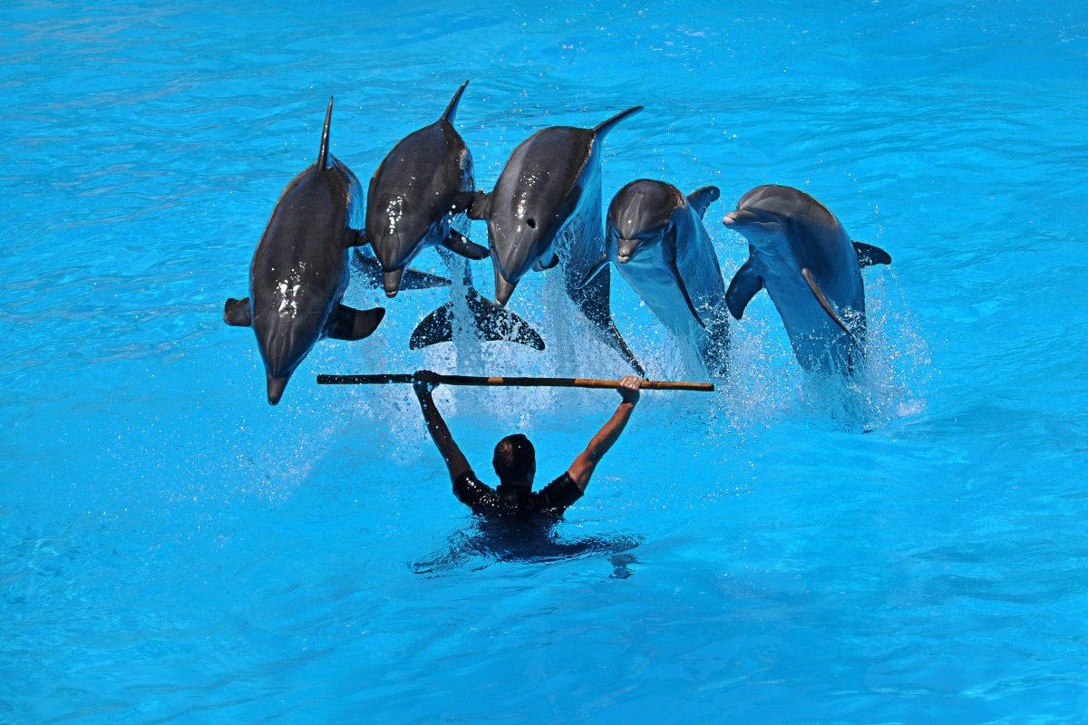 delfiny show