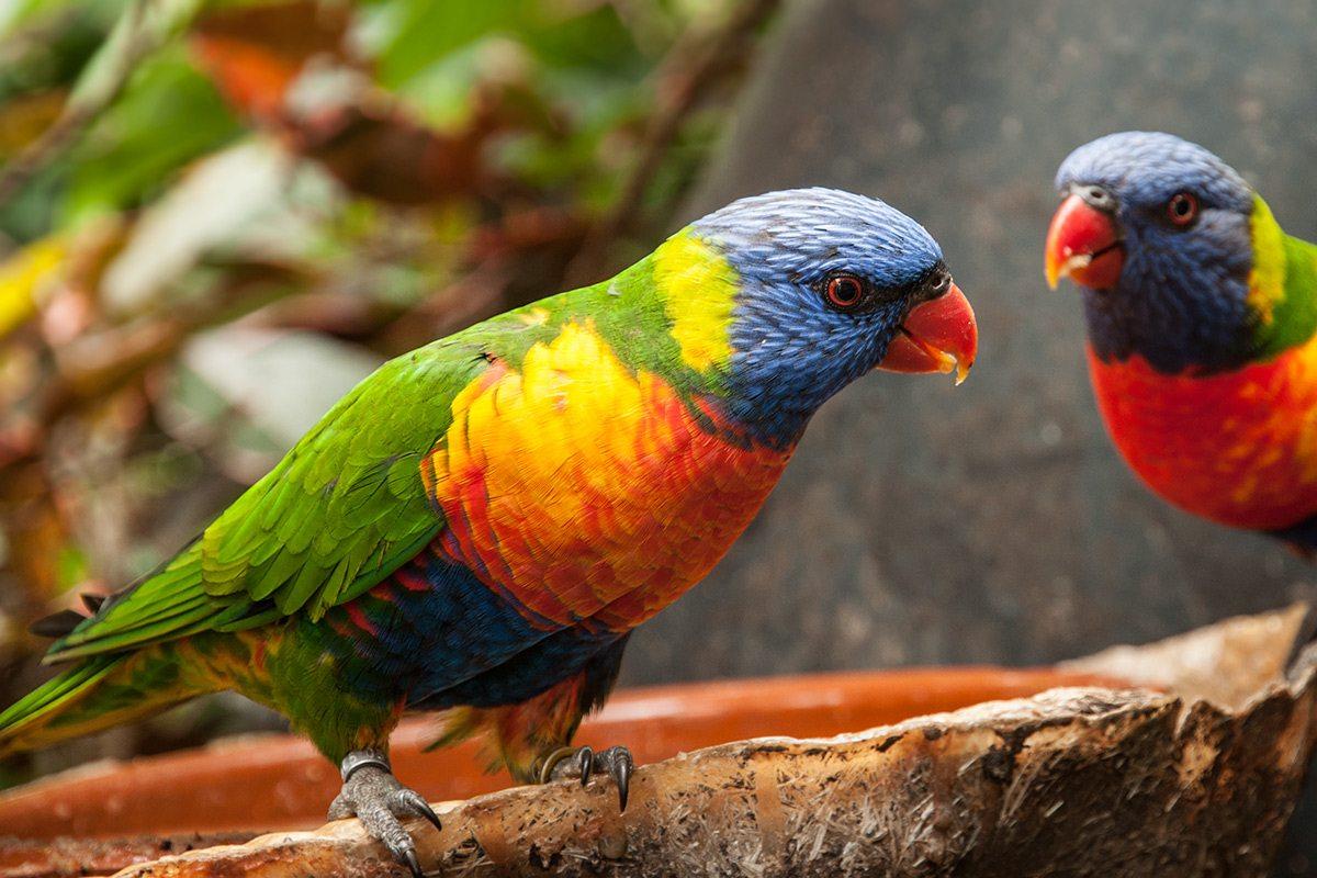 Loro Park papagáje