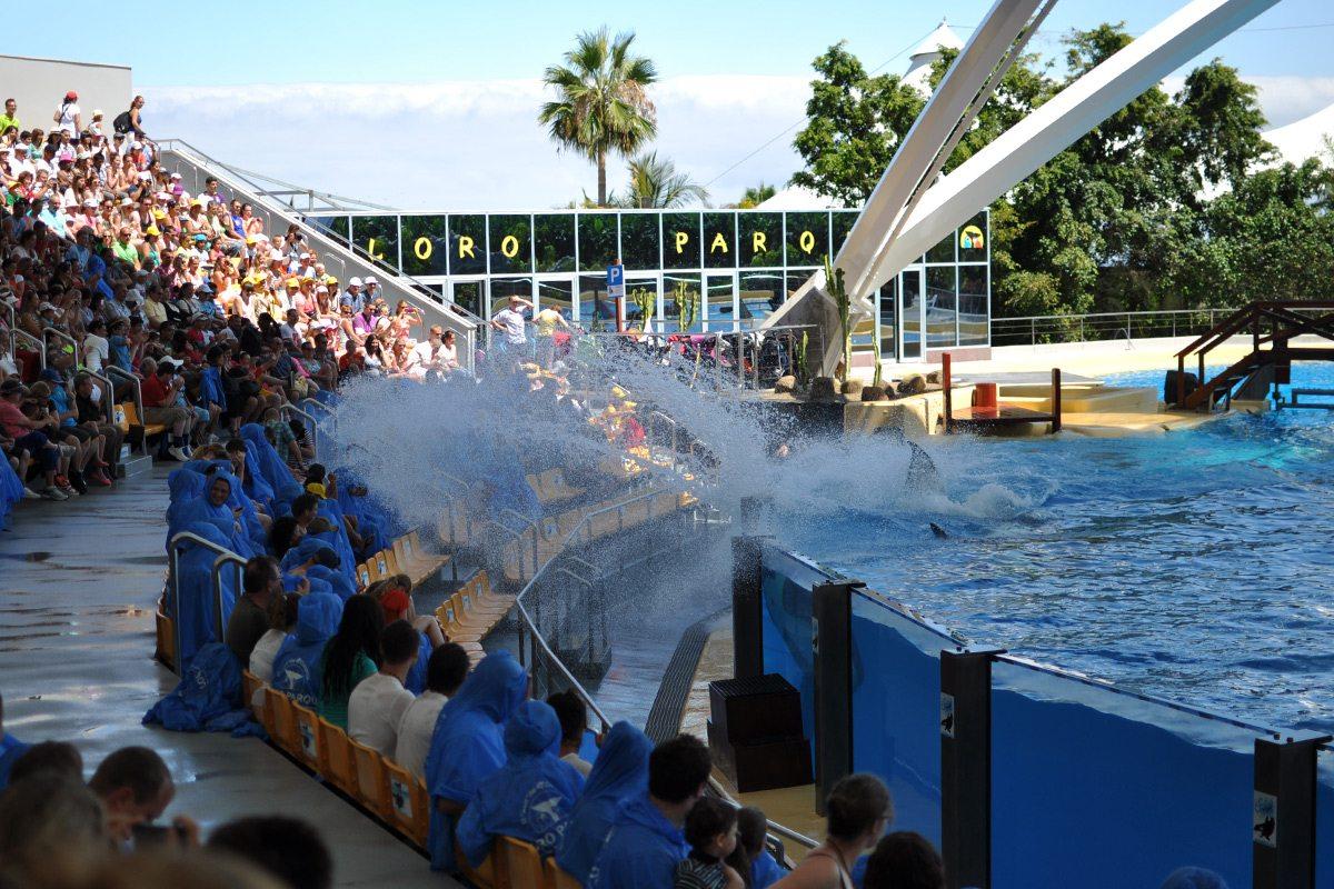 orca show splash