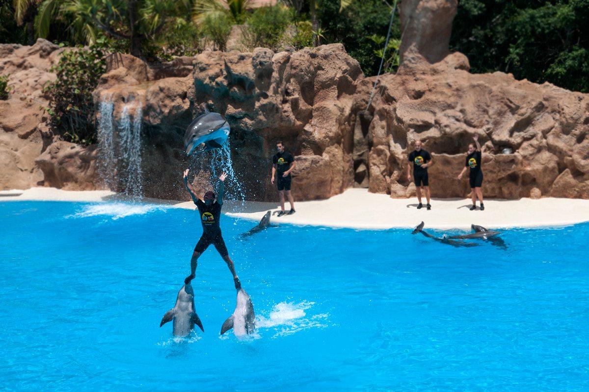 loro park delfíny