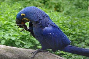 papagáj s orieškom