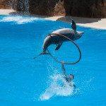 skákajúci delfín