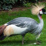 zaujímavý vták