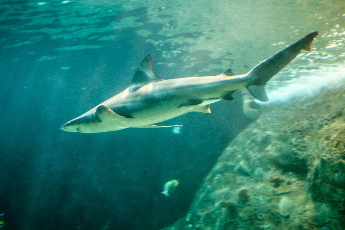 žralok akváriový tunel