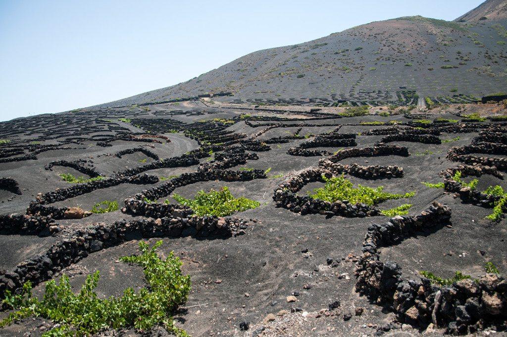 vinohrady La Geria - Lanzarote