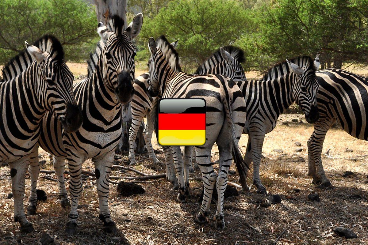 zvieratá po nemecky