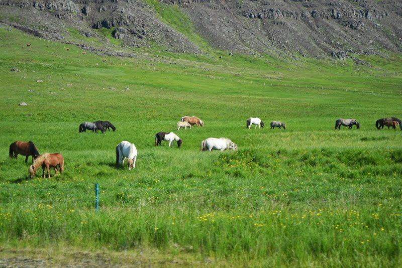 kone na Islande