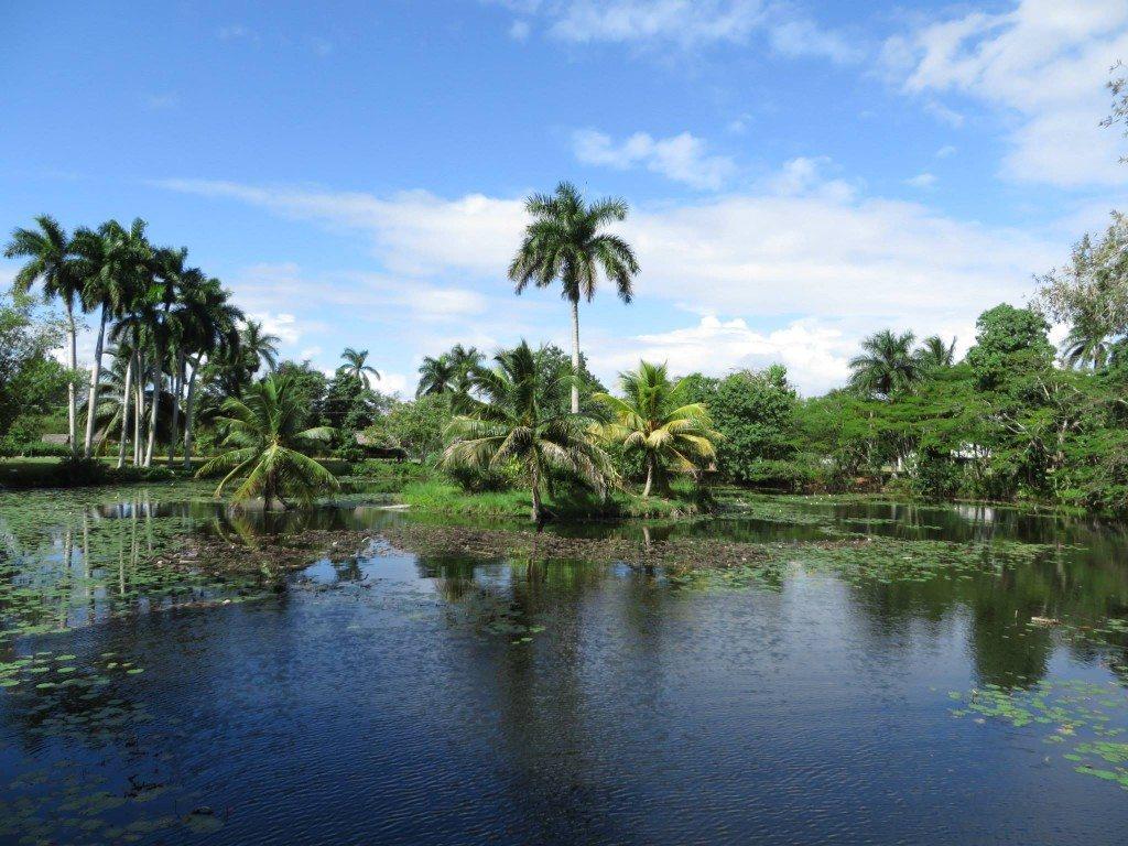 Kuba aligatoria farma