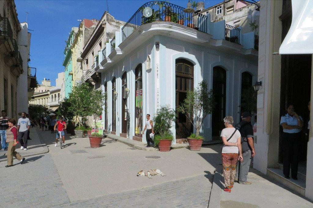 Kuba - pes na ulici