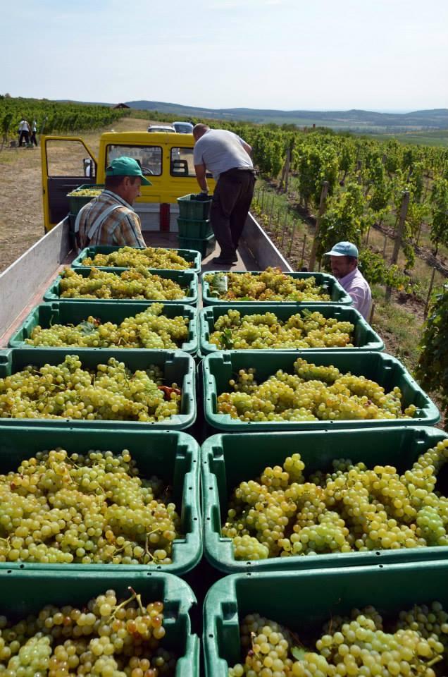 Tokaj - vinárska oblasť