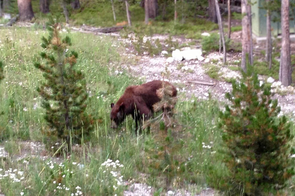 brown bear near hotel