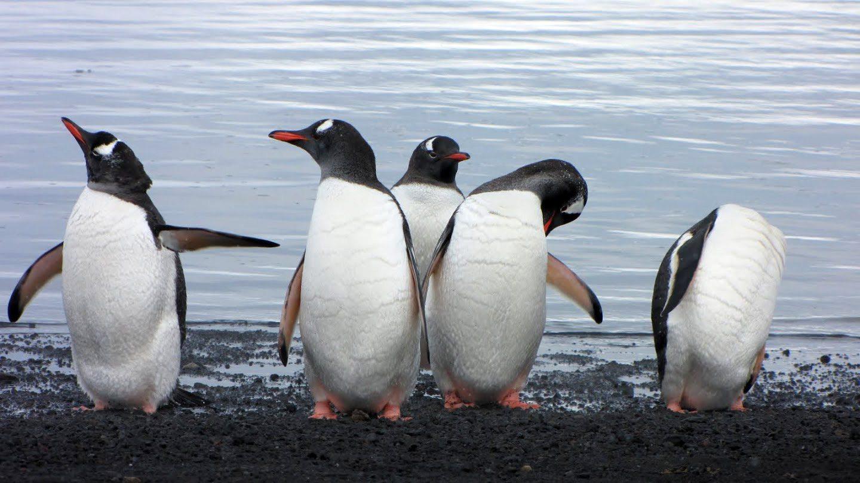 tučniaky na antarktíde
