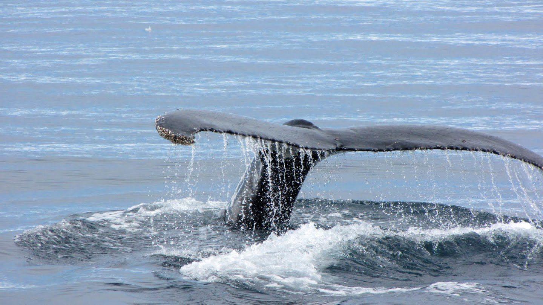 Veľryba na Antarktíde
