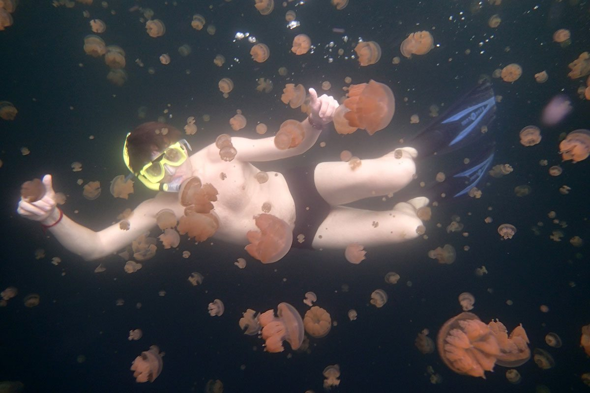 Mikronézia medúzy