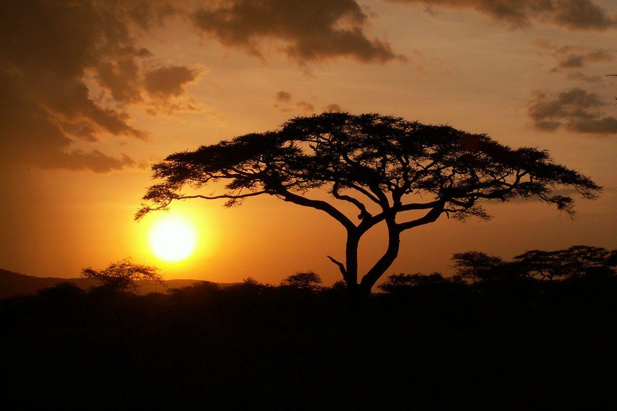 Afrika - západ slnka a africké stromy