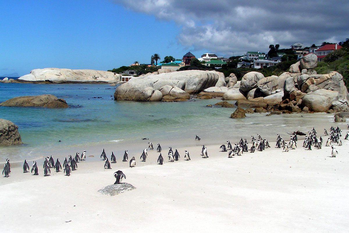 Africké tučniaky v JAR