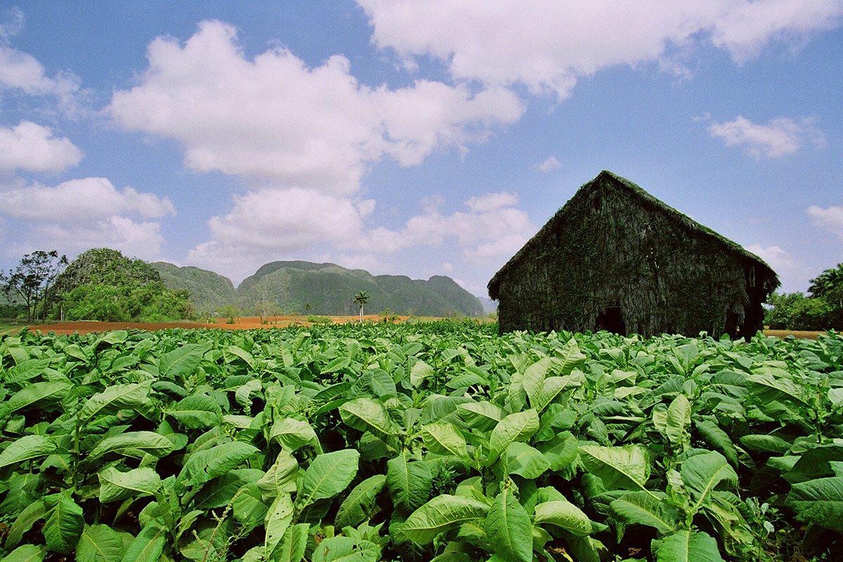 Roľnícky dom, údolie Vinales