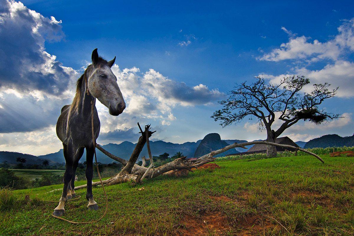 údolie Vinales, Kuba