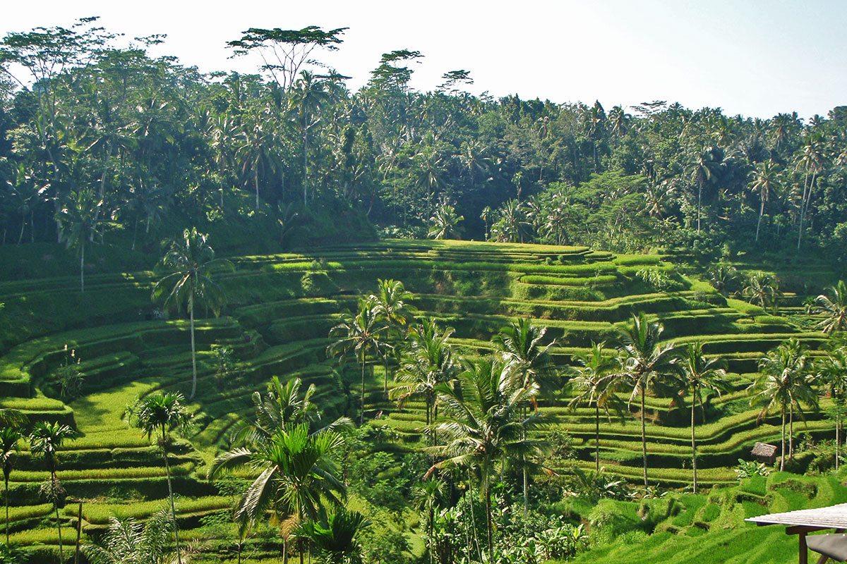 Príroda na ostrove Bali