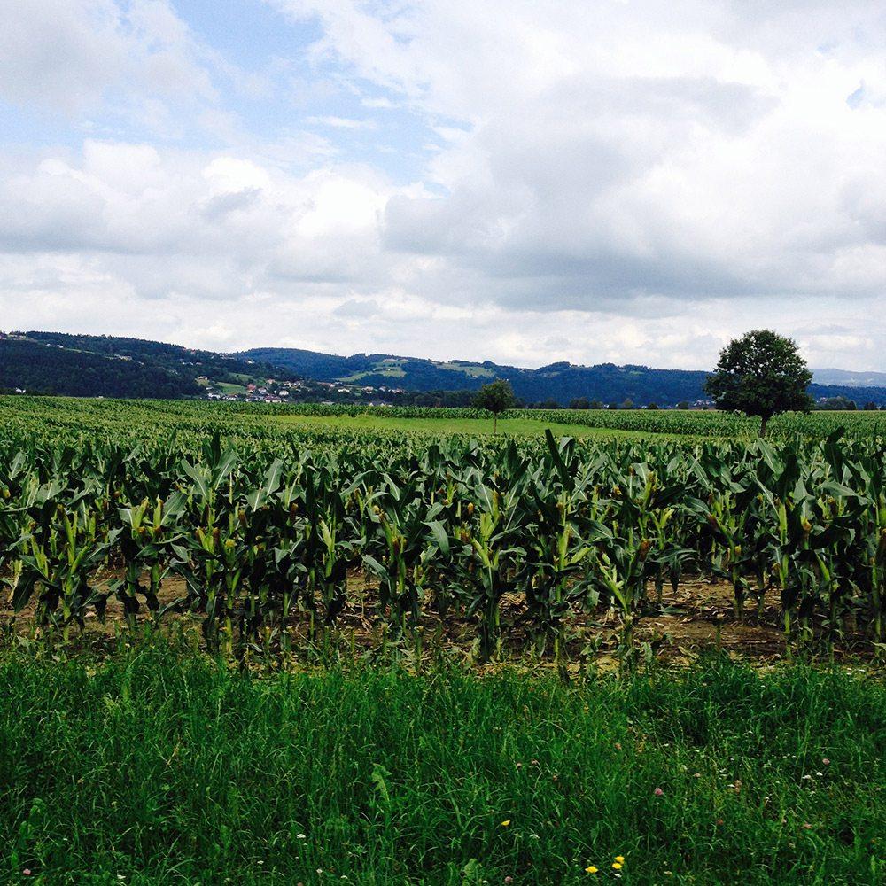 príroda rakúsko