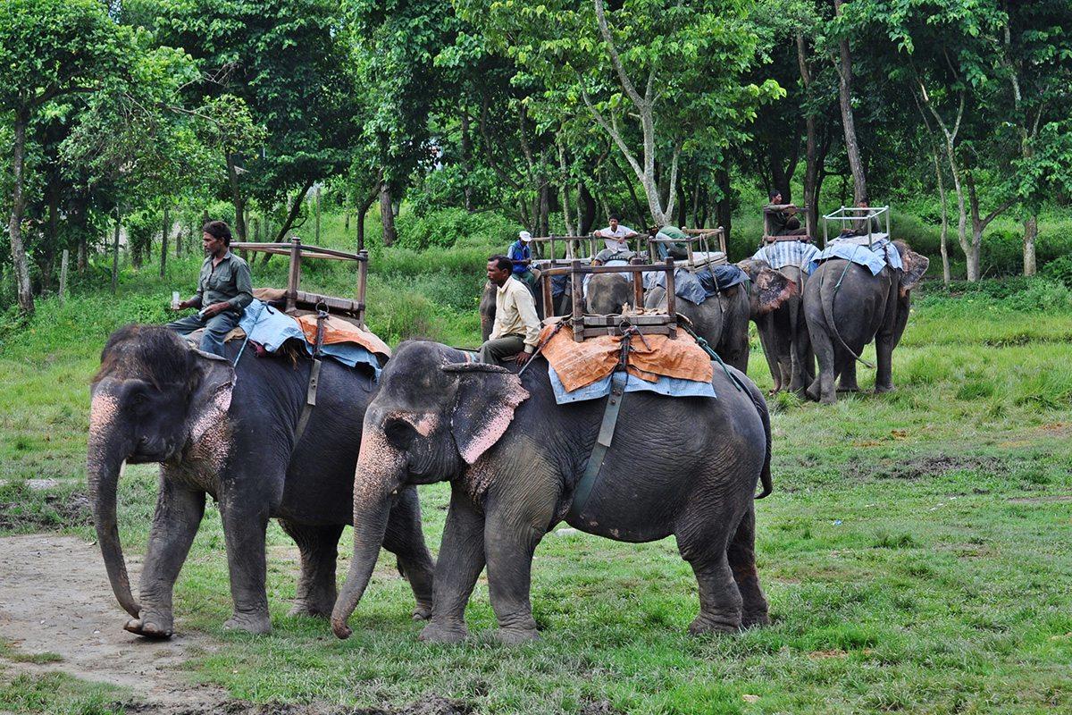 Slony v Chitwan