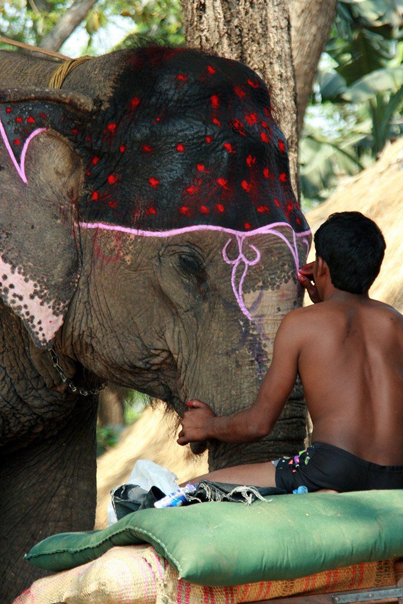 Dekorácie na slonovi v Nepále